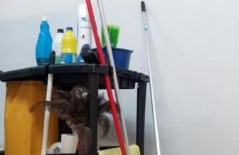 Se abre el plazo de presentación de documentación para la licitación de productos de limpieza